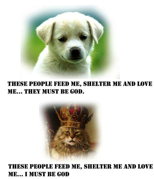 117038_dogcat