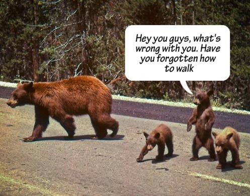 117114_bear